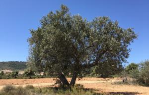 tree3578
