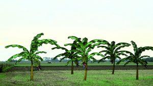 von-bananenba%cc%88umen-tra%cc%88umen